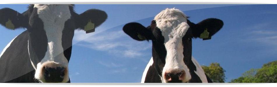 1-balanceado-leche